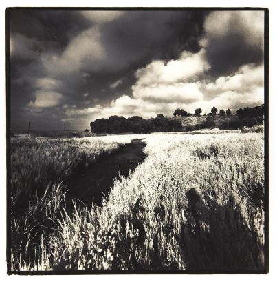 Debra DiPaolo Photography, Field