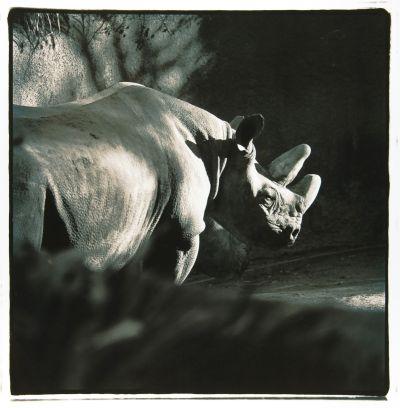 Debra DiPaolo Photography, rhino